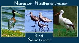 Nandur Madhameshwar Bird Sanctuary, Nashik